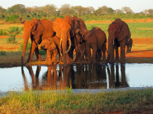Africa ElephantViewing